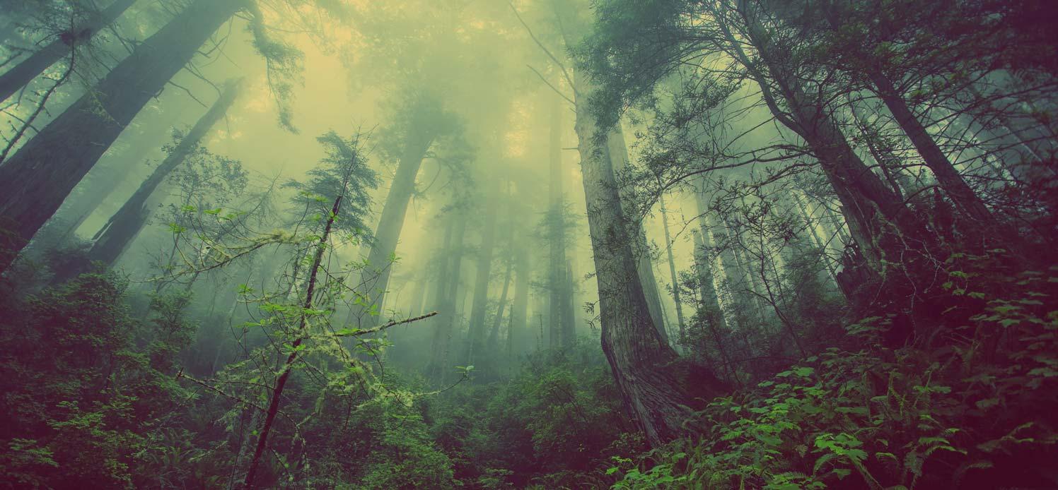 Charte environnementale Soremo